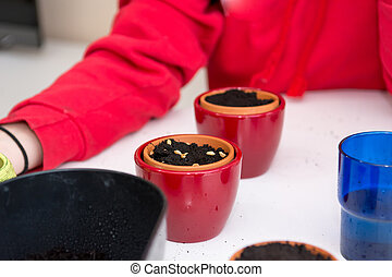 Closeup of female hands planting seeds into small pots.