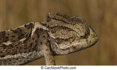 Closeup of female