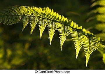 Closeup of fern