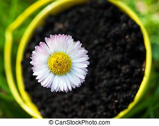 closeup of flower