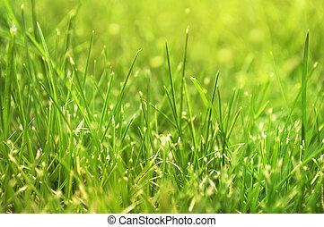 Closeup of fresh green spring grass.
