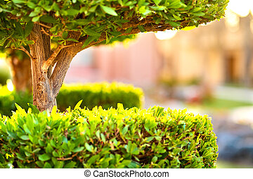 Closeup of fresh green tree with wooden trunk and vibrant green leaves growing in summer garden.