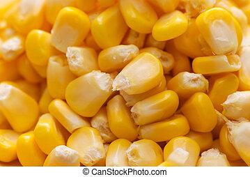 Closeup of fresh sweet yellow corn seeds