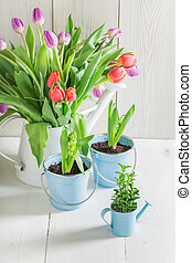Closeup of fresh tulip on a white table