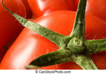 Closeup of freshly picked tomatoes