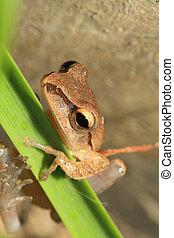 Closeup of frog head,Focus on eye