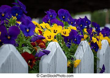 Closeup of garden pansies in a flower pot