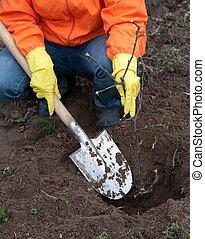 gardener resetting tree in soil - Closeup of gardener ...