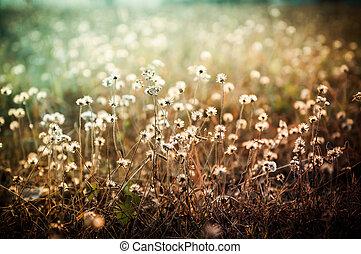 Closeup of grass flower