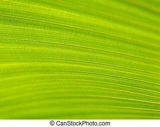 Closeup of Green and yellow palm leaves texture background ...