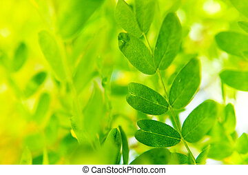 Closeup of green fresh spring leaves