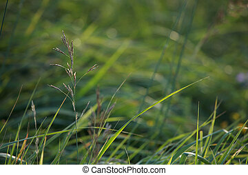 Closeup of green grass; Za?a p?ava tuvpl?n? - Closeup of...