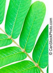 Closeup of  green leaf  background