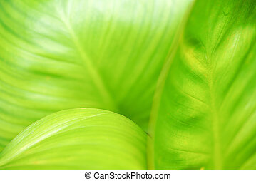 Closeup of green leaf in the garden. Greenery background with copy space
