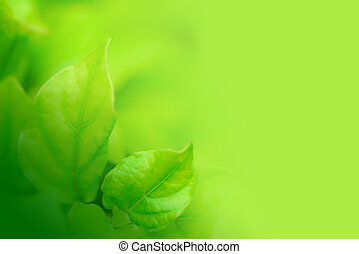 Closeup of green leaf in the garden. Greenery background