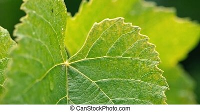 Closeup of green leaves in heavy rain