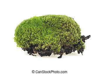 Closeup of green moss isolated on a white background, selective focus.
