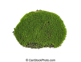 Closeup of green moss isolated on a white background, top view.