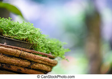 green plant in wooden pot