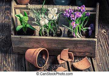 Closeup of green plants in wooden box