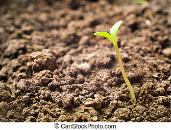 seedling growing out of soil