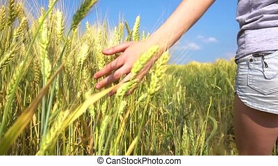 Closeup of hand of teen girl touching cereal grass - Closeup...