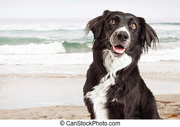 Closeup of Happy Dog at Beach