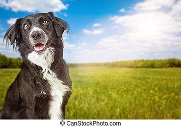 Closeup of Happy Yellow Labrador Dog Crossbreed - A closeup...
