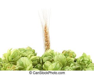 Closeup of hop and wheat ear.