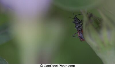 Closeup of insect over blurred green background for text
