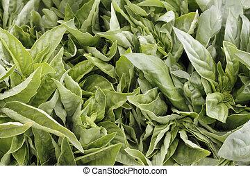 Closeup of Italian Basil