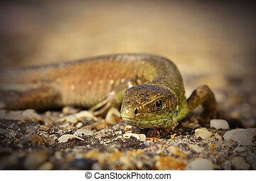 closeup of juvenile green lizard