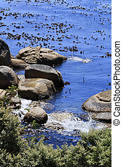 Closeup of Kelp and boulders in Africa
