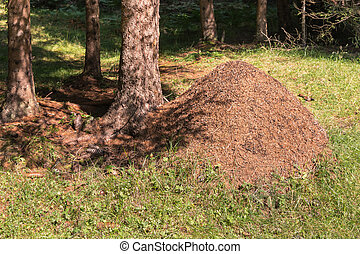 large anthill with pine needles in forest - closeup of large...