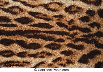 closeup of leopard fur texture
