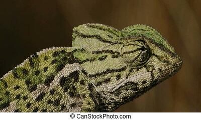 Closeup of male