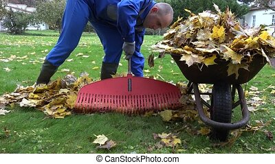 closeup of man with rake load barrow cart with autumn leaves in house yard. 4K