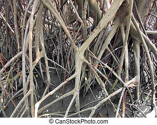 closeup of mangrove roots