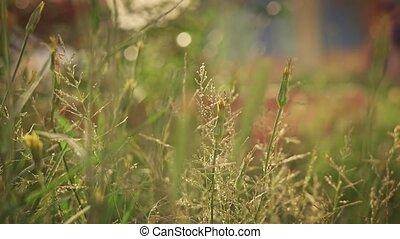 Closeup of many differednt wild grass spices slomo - Closeup...