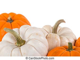 Closeup of mini pumpkins on white