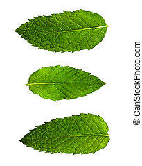 closeup of mint leafs on white back - extreme closeup of...