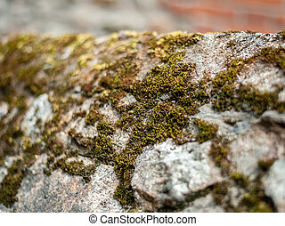 Closeup of moss growing on a stone wall
