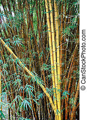 green yellow bamboo bush