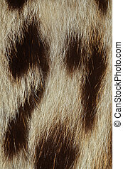 closeup of ocelot fur texture