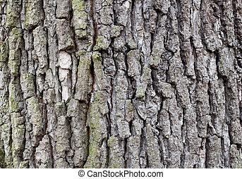 Closeup of old tree bark