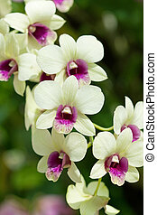 Closeup of orchids