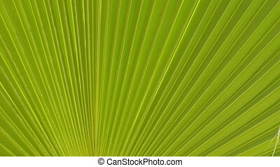 Closeup of palm leaf fluttering on wind, abstract background