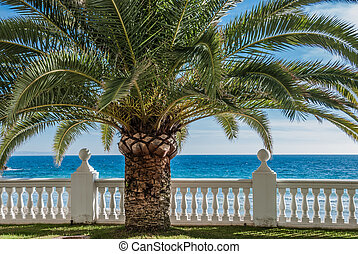Closeup of palm tree at a tropical paradise with balustrade and ocean