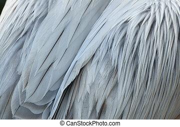 Closeup of pelican plumage