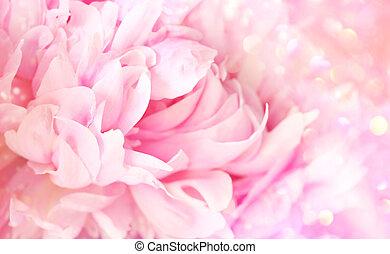 Closeup of peony flower on soft pastel background